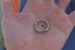 Tiniest shark tooth
