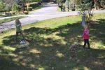 Raking the front yard