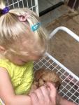 Meeting puppies