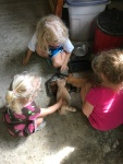 Kittens at the blueberry farm
