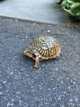 Wildlife on our driveway
